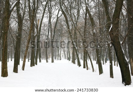 Winter trees in the city park - stock photo