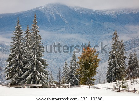 Winter trees in the mountains. Carpathians, Ukraine - stock photo