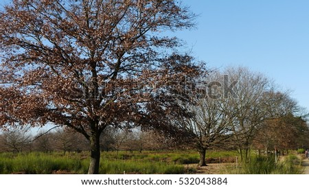 Winter Trees near Cologne