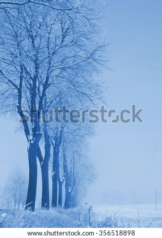 winter trees near the field; blue filter effect - stock photo