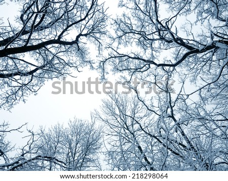 Winter trees on sky background - stock photo
