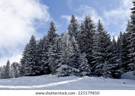 winter trees on snow - stock photo