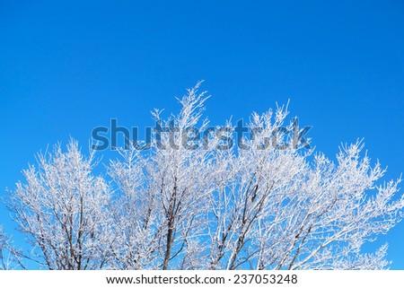 winter trees on snow  - stock photo