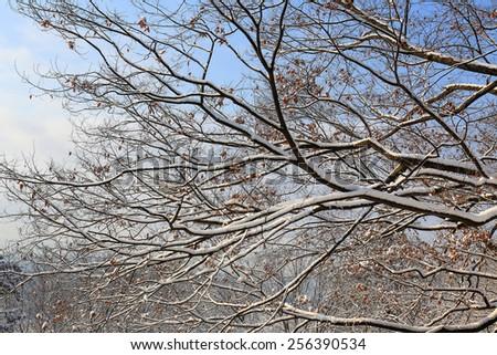 winter trees on snow. - stock photo