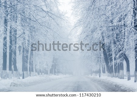 Winter trees on snow in hazy park with long white road - stock photo