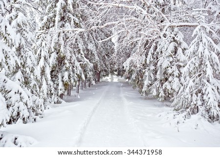 Winter trees road covered with fresh snow - stock photo