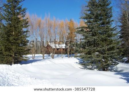 Winter trees scenic, - stock photo
