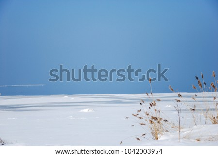 Winter view by an icy coast with some reeds in the foreground