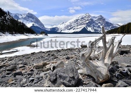 Winter view of a frozen lake with driftwood in the Rocky Mountains of Canada