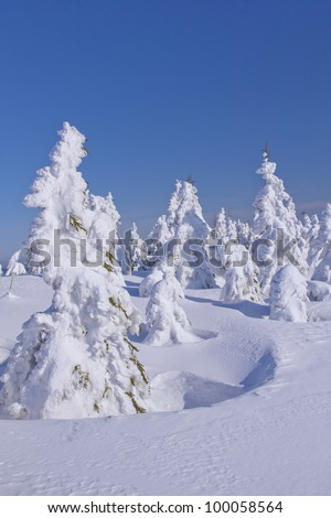 Winter view of snow covered mountain and trees with blue sky in the background (Mountains Jeseniky, Czech Republic) - stock photo