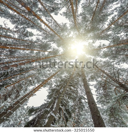 Winter view of the trees in the deep forest. - stock photo