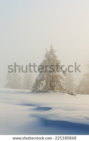 Winter view with spruce in the snow. Christmas view - stock photo