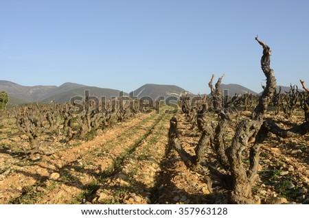 Winter Vineyards of Cote du Rhone in Drome provencal in France - stock photo