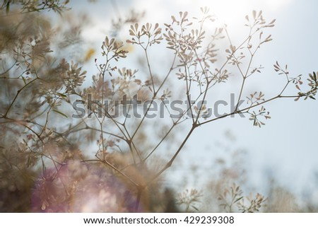Winter vintage flower with flare nature. - stock photo