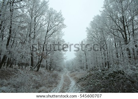 Winter walk in the woods