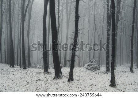 winter weather and snow in forest - stock photo