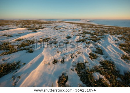 Winter wheat covered with melting snow in early spring - stock photo
