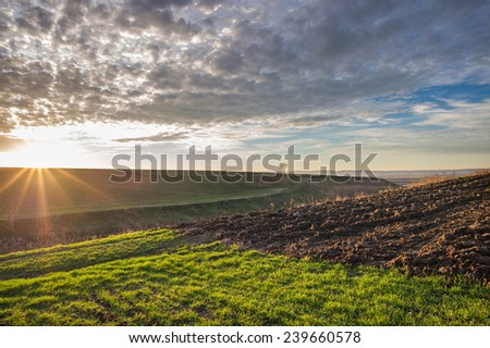 Winter wheat field in morning - stock photo