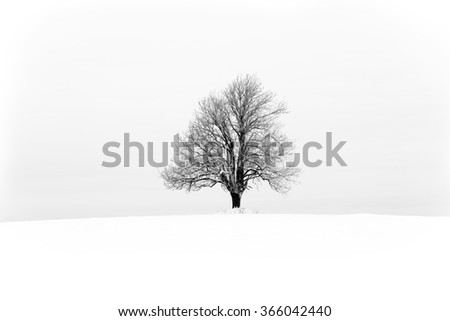 Winter with snow and a lonely tree in a field