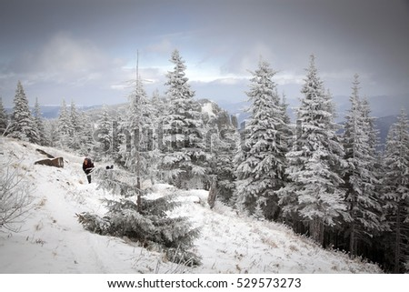 winter wonderland - Christmas background with snowy fir trees in the mountains