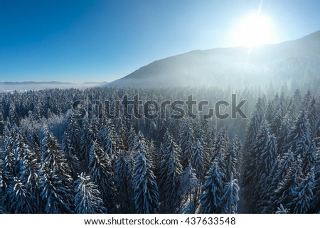 Winter wonderland from above morning sunrise spruces aerial view - stock photo