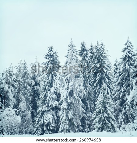 Winter wonderland landscape.Special toned photo in vintage style - stock photo
