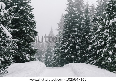Winter wonderland. Snowy forest.