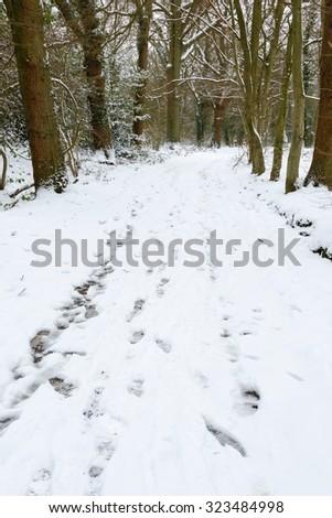 Winter woods - stock photo