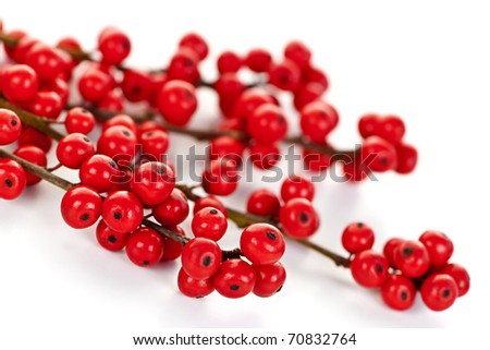 Winterberry Christmas branches with red holly berries - stock photo