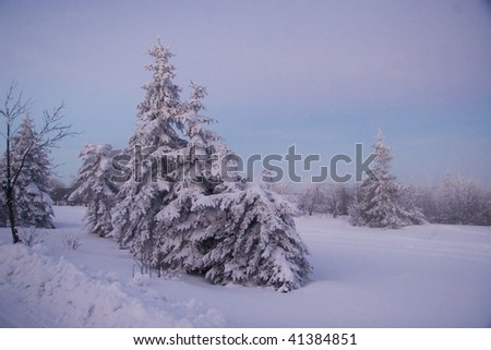 Winterdream - stock photo