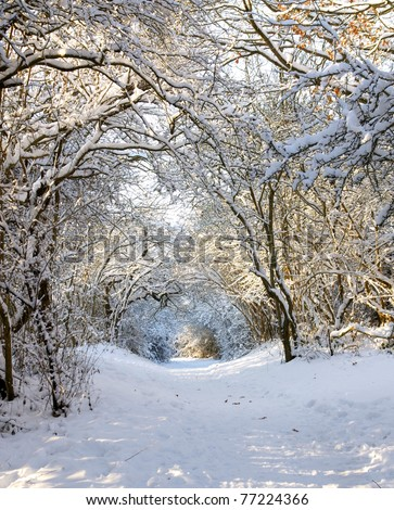 winterlandscape with trees covered with white snowflakes - stock photo