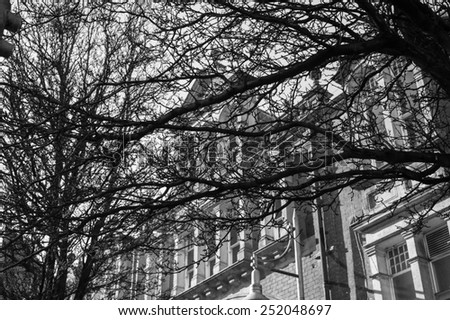 Wintry city scene - mesh of leafless branches of winter trees with historic old building in background.