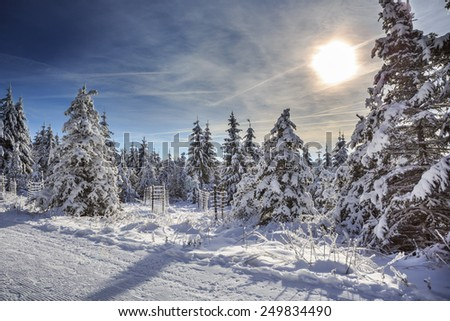 wintry forest at a sunny day near Masserberg in Thuringia,  Germany - stock photo