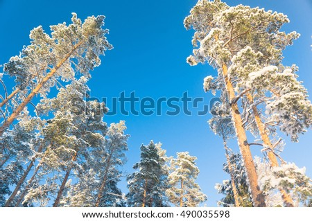 Wintry Landscape Icy Forest