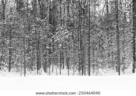 Wintry Landscape of Forest in B&W - stock photo
