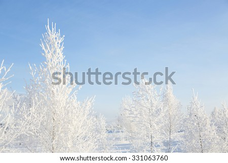 Wintry landscape with snowy trees. Beautiful white winter. Blue sky. - stock photo