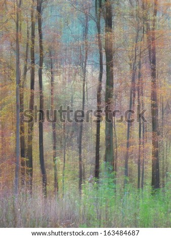wipe effect with long exposure in a forest in Germany