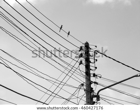 Wire Birds Sky Electricity Cable Line Stock Photo (Royalty Free ...