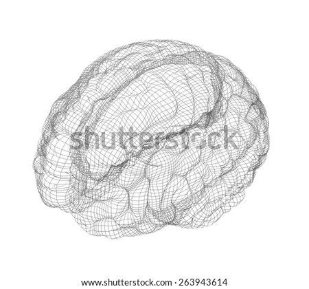 Wire-frame of human with occipital region of brain. Isolated on white background - stock photo