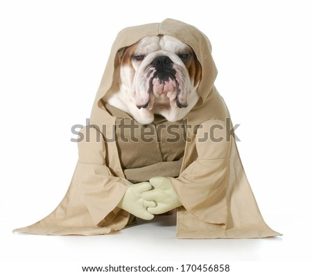 wise dog - english bulldog wearing munk costume isolated on white background - stock photo