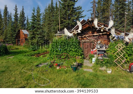 WISEMAN, ALASKA, USA-JULY 13, 2009: trappers hut and trappers garden