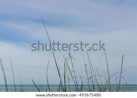 Wispy seagrass closeup with blue sky and sea in background