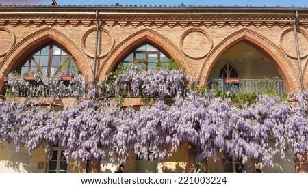 wisteria - stock photo