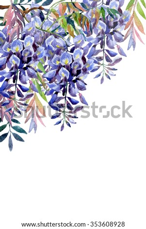 Wisteria flower. Watercolor wisteria card. Hand painted illustration on white background - stock photo