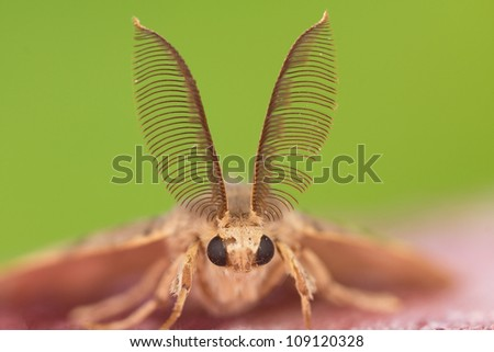 With a male moth antennae - stock photo
