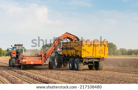 With a picking machine mounted at the tractor and a farm trailer the dried red onions are collected from the field. - stock photo