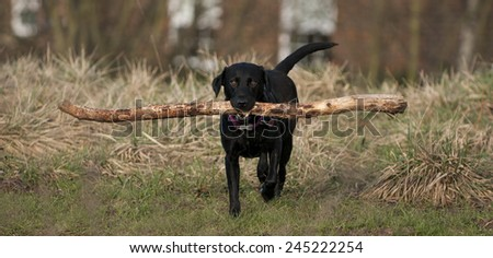 with stick - stock photo