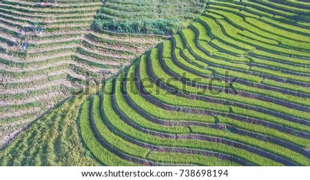 with the terraced rice fields thailand