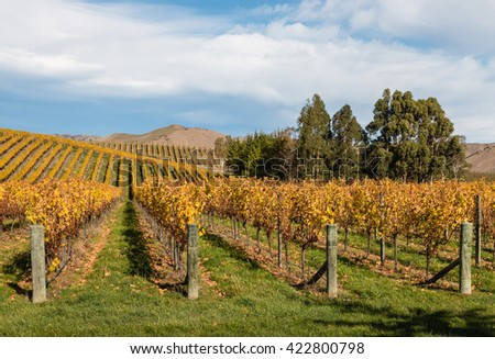 Wither Hills vineyards in New Zealand