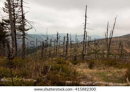 withered broken, fallen trees on the peaks of the Silesian Beskid in the area Malinowska Rocks in Poland
